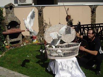 Porumbei Oradea Nunta Oradea